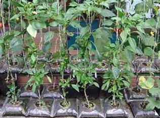 家庭菜園2.jpg